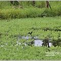 光復馬太鞍濕地-2020-04-68.jpg