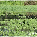 光復馬太鞍濕地-2020-04-73.jpg