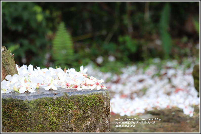 瑞穗虎頭山步道-2020-04-32.jpg