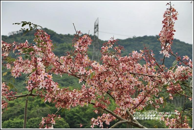 萬榮社區停車場花旗木-2020-04-09.jpg