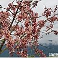 鳳林長橋花旗木-2020-04-08.jpg