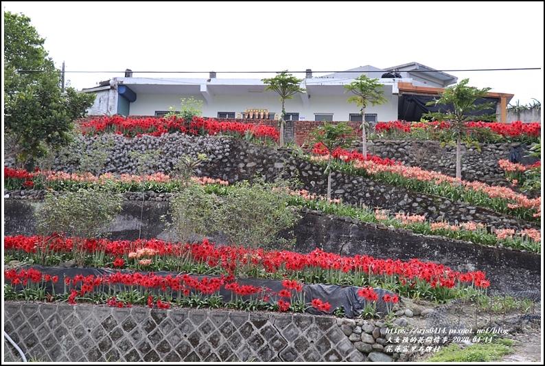 富里石碑村孤挺花-2020-04-01.jpg