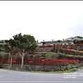 富里石碑村孤挺花-2020-04-31.jpg