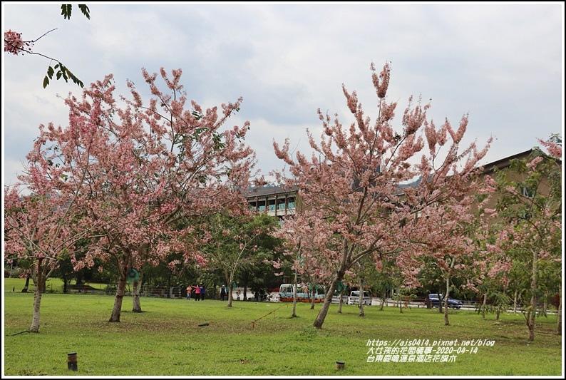 台東鹿鳴溫泉酒店花旗木-2020-04-07.jpg