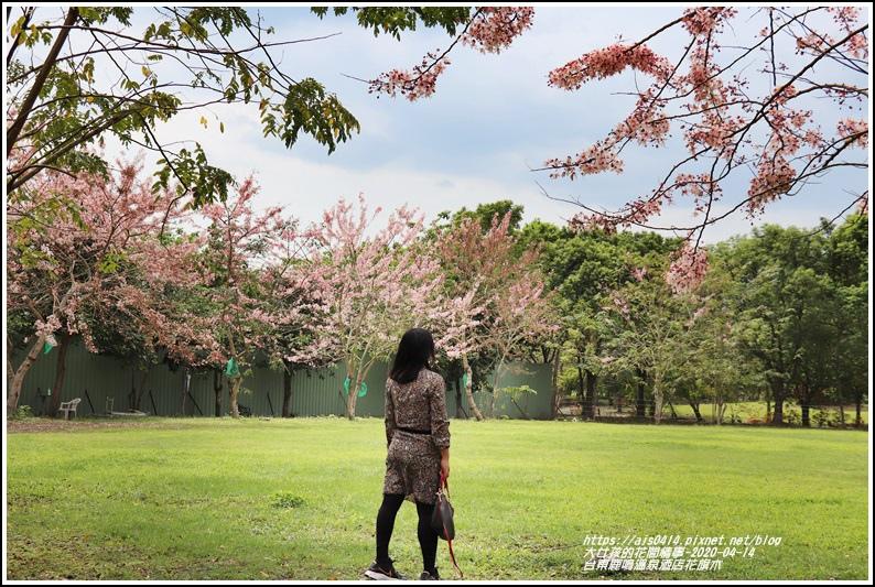 台東鹿鳴溫泉酒店花旗木-2020-04-14.jpg