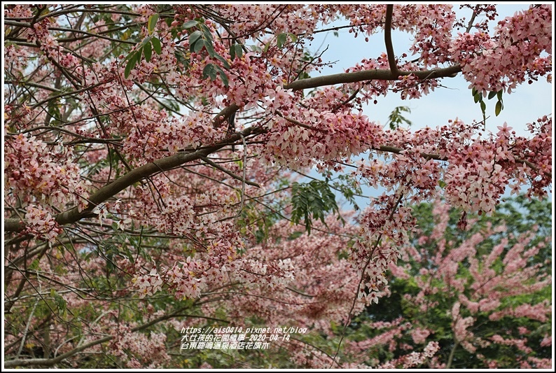 台東鹿鳴溫泉酒店花旗木-2020-04-08.jpg
