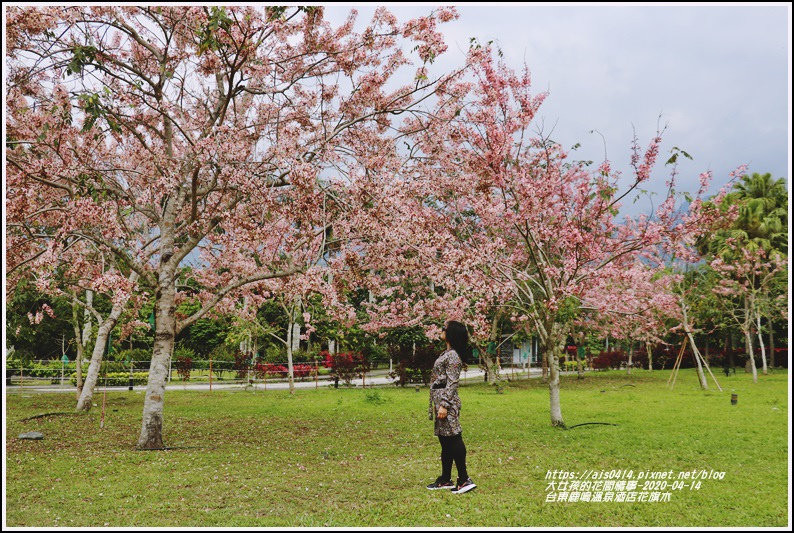 台東鹿鳴溫泉酒店花旗木-2020-04-11.jpg