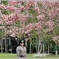 台東鹿鳴溫泉酒店花旗木-2020-04-13.jpg
