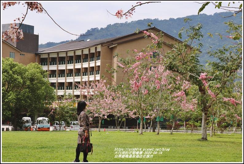 台東鹿鳴溫泉酒店花旗木-2020-04-16.jpg