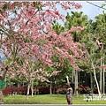 台東鹿鳴溫泉酒店花旗木-2020-04-17.jpg
