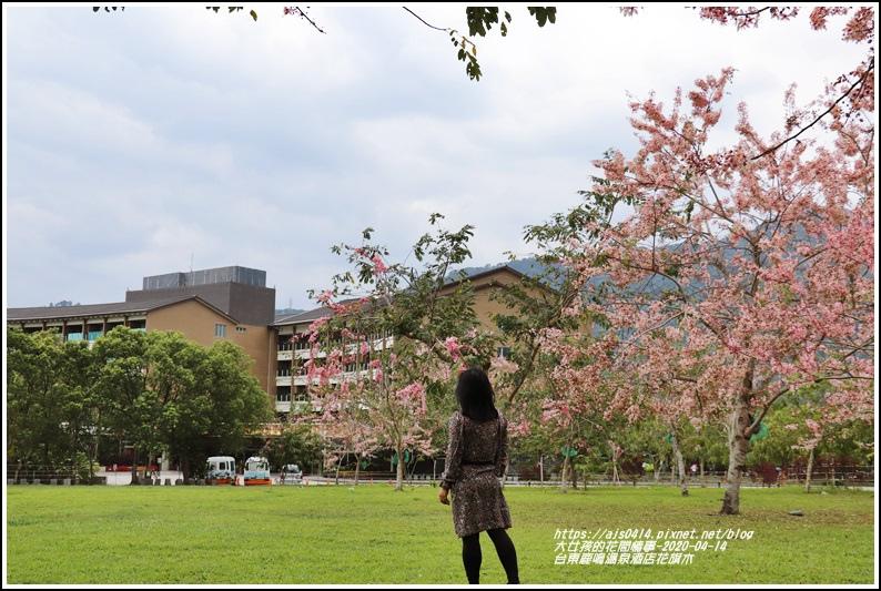 台東鹿鳴溫泉酒店花旗木-2020-04-24.jpg