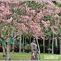 台東鹿鳴溫泉酒店花旗木-2020-04-22.jpg