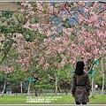 台東鹿鳴溫泉酒店花旗木-2020-04-27.jpg