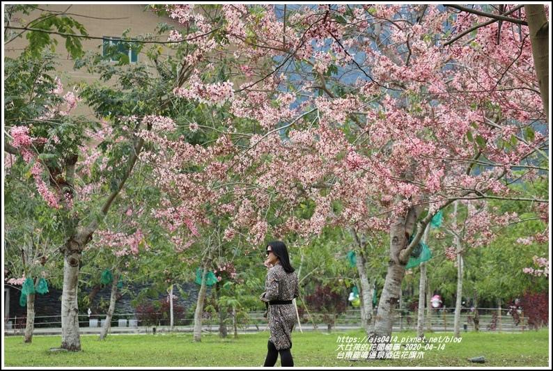 台東鹿鳴溫泉酒店花旗木-2020-04-28.jpg