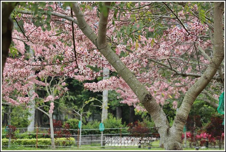 台東鹿鳴溫泉酒店花旗木-2020-04-34.jpg