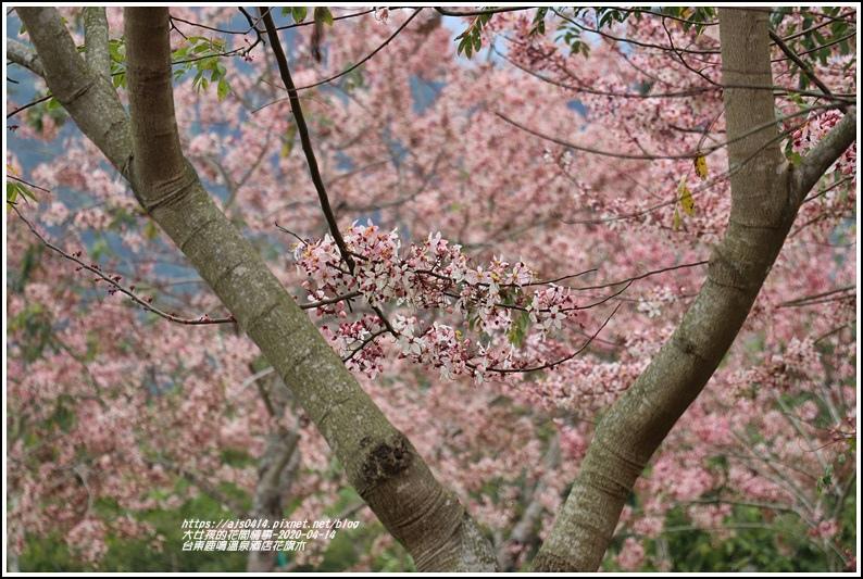 台東鹿鳴溫泉酒店花旗木-2020-04-36.jpg