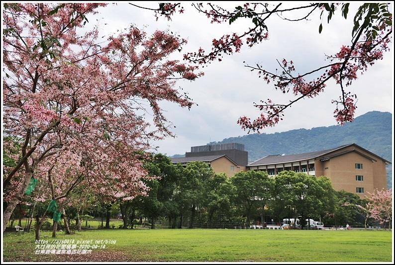 台東鹿鳴溫泉酒店花旗木-2020-04-40.jpg