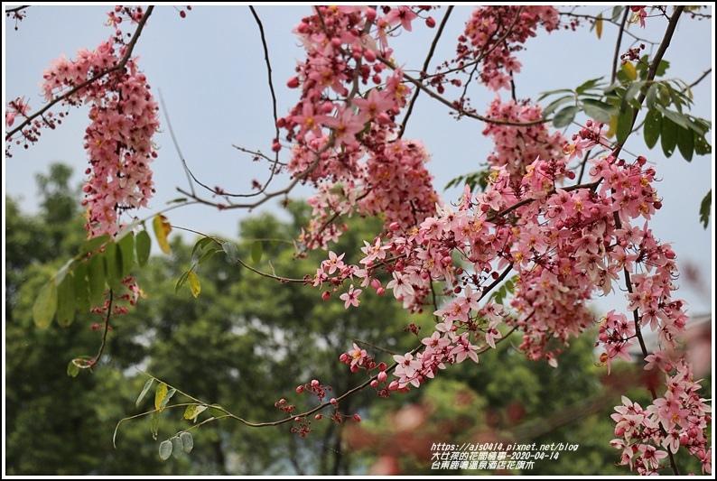 台東鹿鳴溫泉酒店花旗木-2020-04-55.jpg