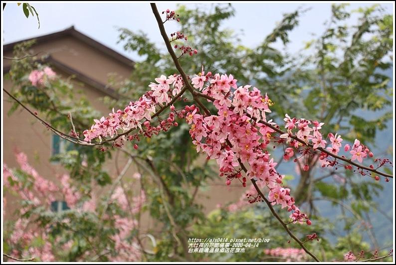 台東鹿鳴溫泉酒店花旗木-2020-04-52.jpg