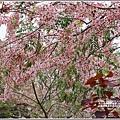 台東鹿鳴溫泉酒店花旗木-2020-04-72.jpg