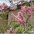 台東鹿鳴溫泉酒店花旗木-2020-04-71.jpg
