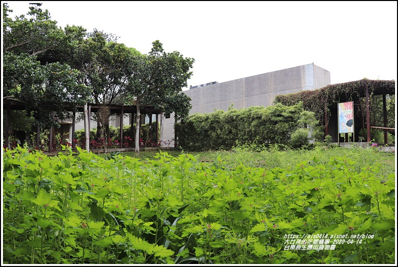 台東原生應用植物園-2020-04-09.jpg