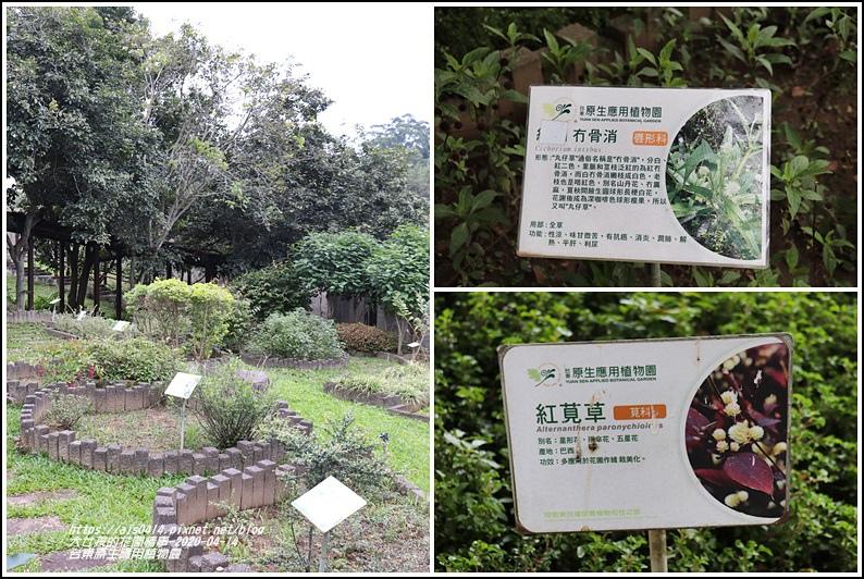 台東原生應用植物園-2020-04-12.jpg