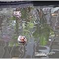 台東原生應用植物園-2020-04-53.jpg