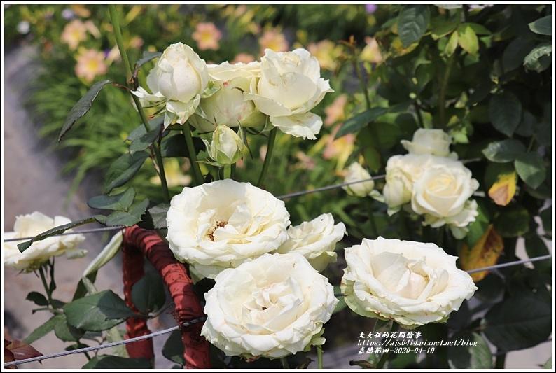 嘉德萱草花田-2020-04-65.jpg
