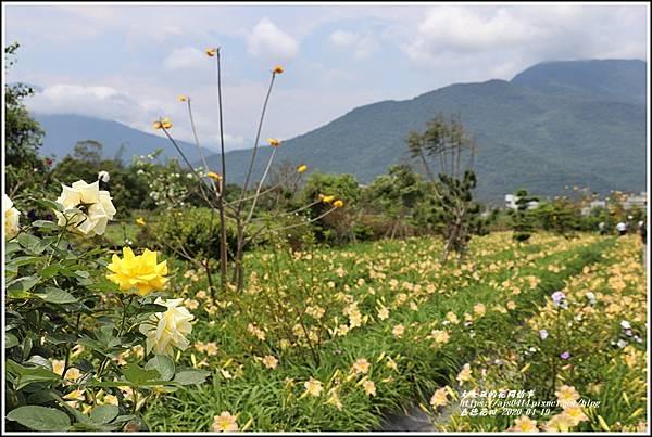 嘉德萱草花田-2020-04-68.jpg