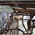 山豬園果子狸咖啡-2020-04-03.jpg