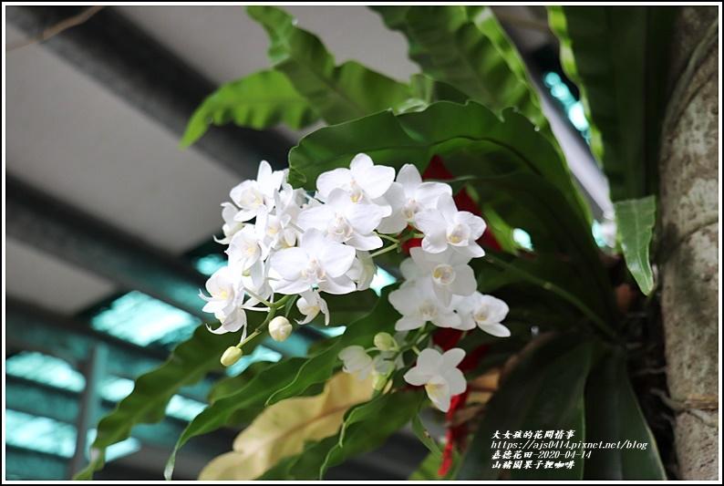 山豬園果子狸咖啡-2020-04-10.jpg