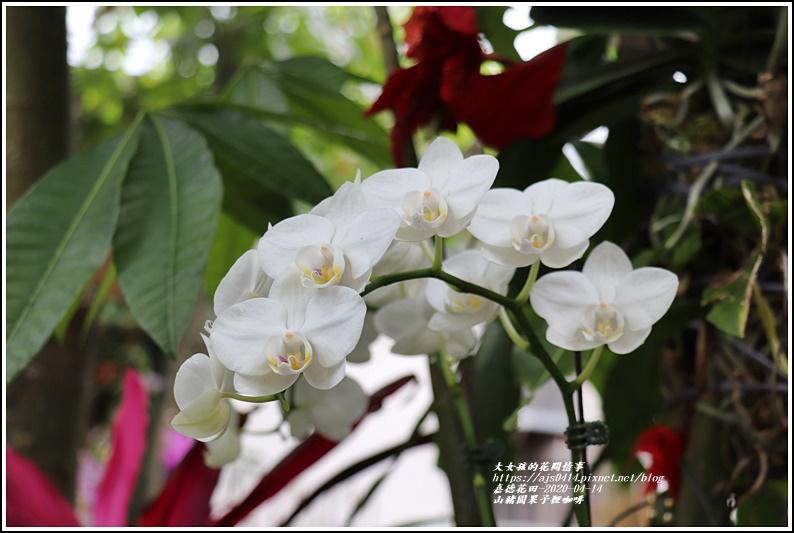 山豬園果子狸咖啡-2020-04-11.jpg
