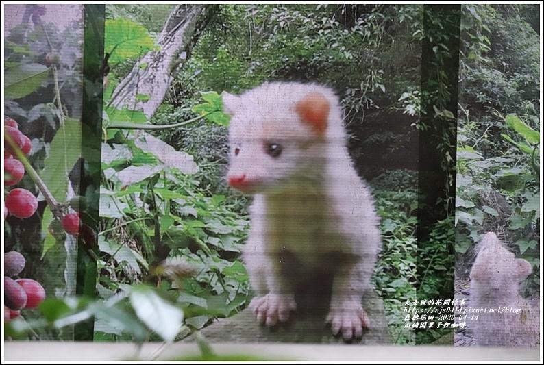 山豬園果子狸咖啡-2020-04-13.jpg