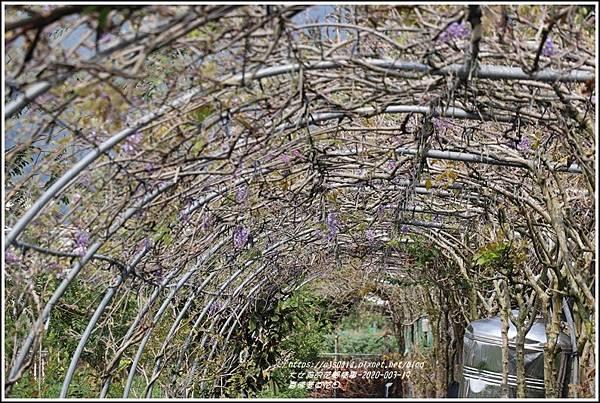 嘉德萱草花田(紫藤)-2020-03-03.jpg