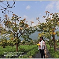 嘉德萱草花田(黃金樹牡丹、彎子木)-2020-03-07.jpg