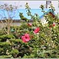 嘉德萱草花田-2020-03-07.jpg