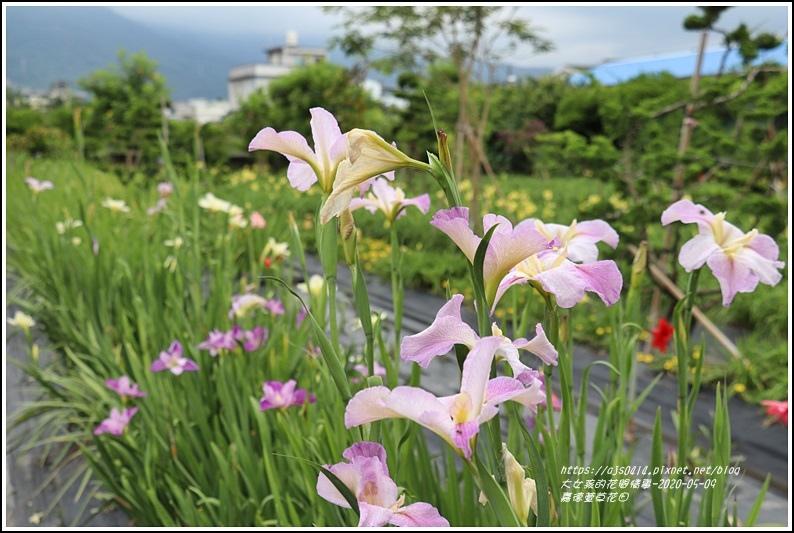 嘉德萱草花田-2020-05-08.jpg
