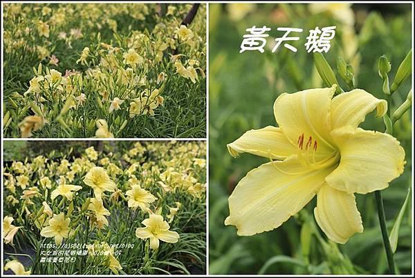 嘉德萱草花田-2020-05-43.jpg
