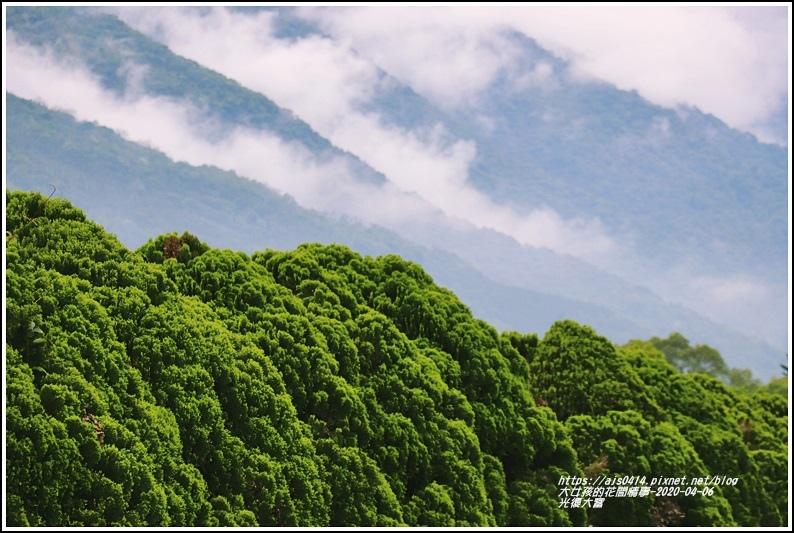 光復大富路段松柏-2020-04-09.jpg