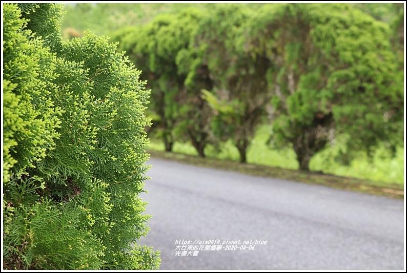 光復大富路段松柏-2020-04-07.jpg