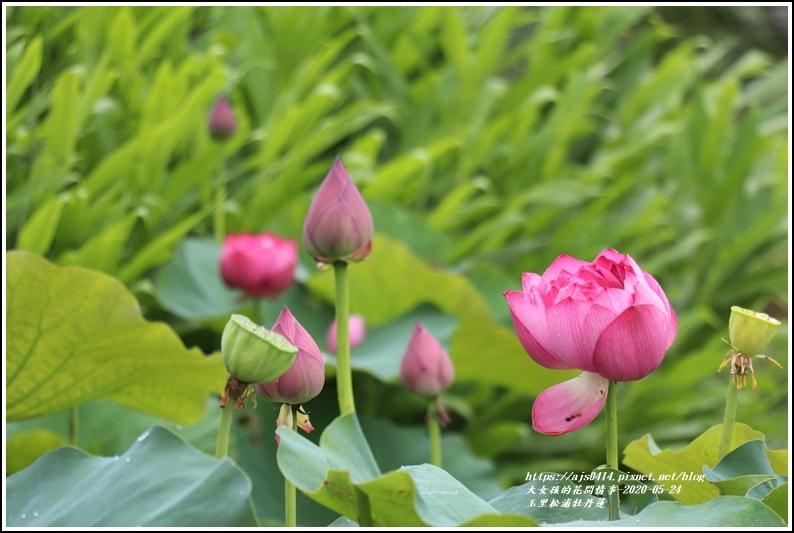 玉里松浦段牡丹蓮-2020-05-06.jpg
