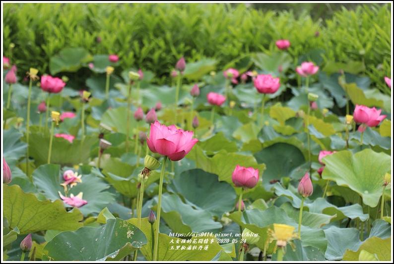 玉里松浦段牡丹蓮-2020-05-26.jpg