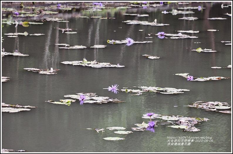 吉安蓮城蓮花園-2020-05-09.jpg