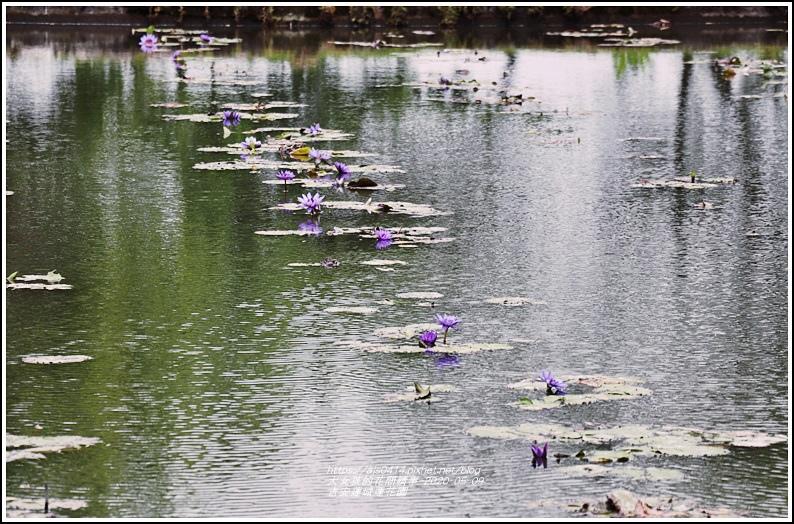吉安蓮城蓮花園-2020-05-08.jpg