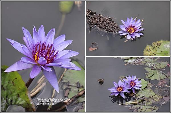 吉安蓮城蓮花園-2020-05-11.jpg