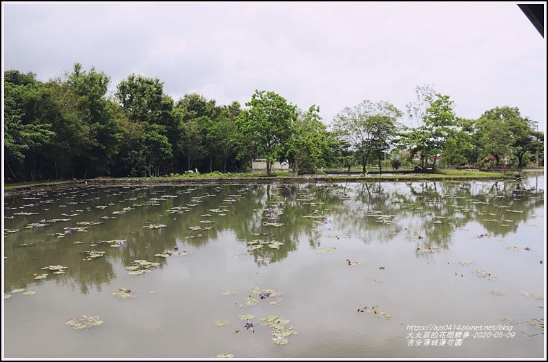 吉安蓮城蓮花園-2020-05-13.jpg