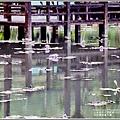 吉安蓮城蓮花園-2020-05-21.jpg