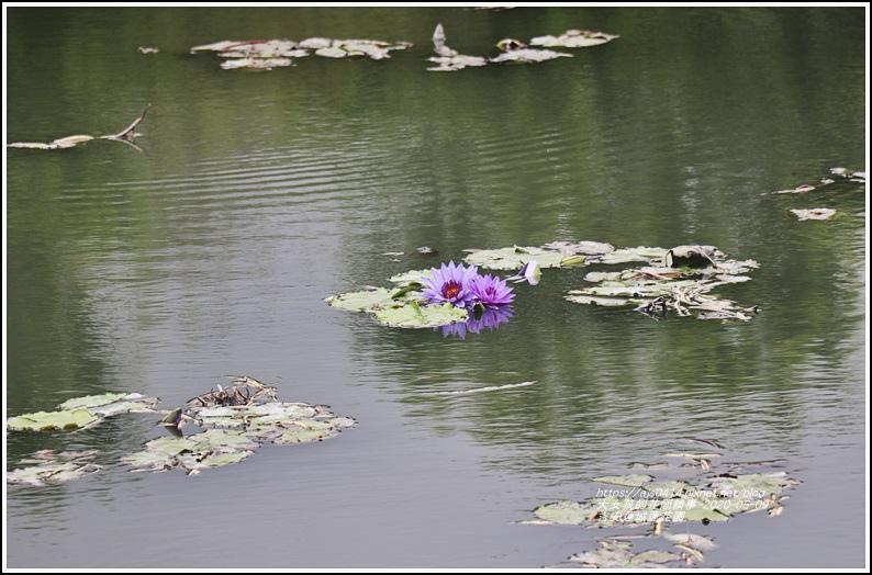 吉安蓮城蓮花園-2020-05-17.jpg