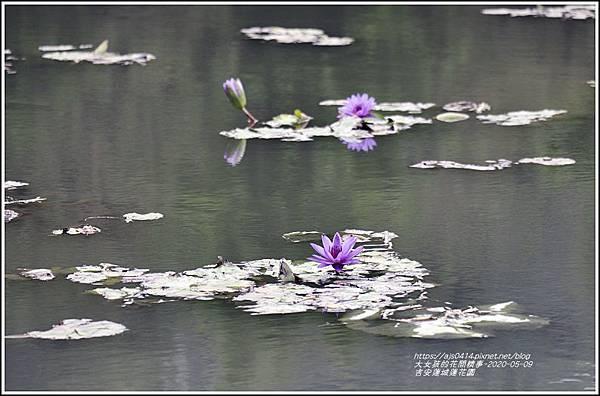 吉安蓮城蓮花園-2020-05-26.jpg
